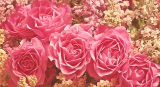 roses-3700010_1280.jpg